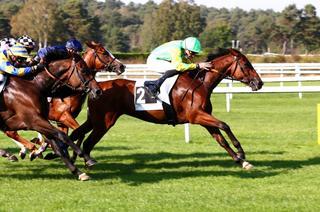 Zelote gagne le GP de Cholet, Genmoss et Charmyra brillent en province