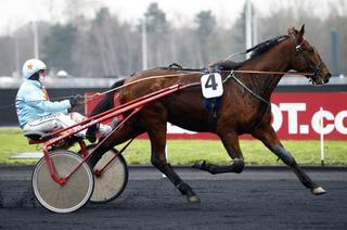 Samedi à Saint-Brieuc (R2C7) : Fakir du Lorault sur le chemin du Critérium